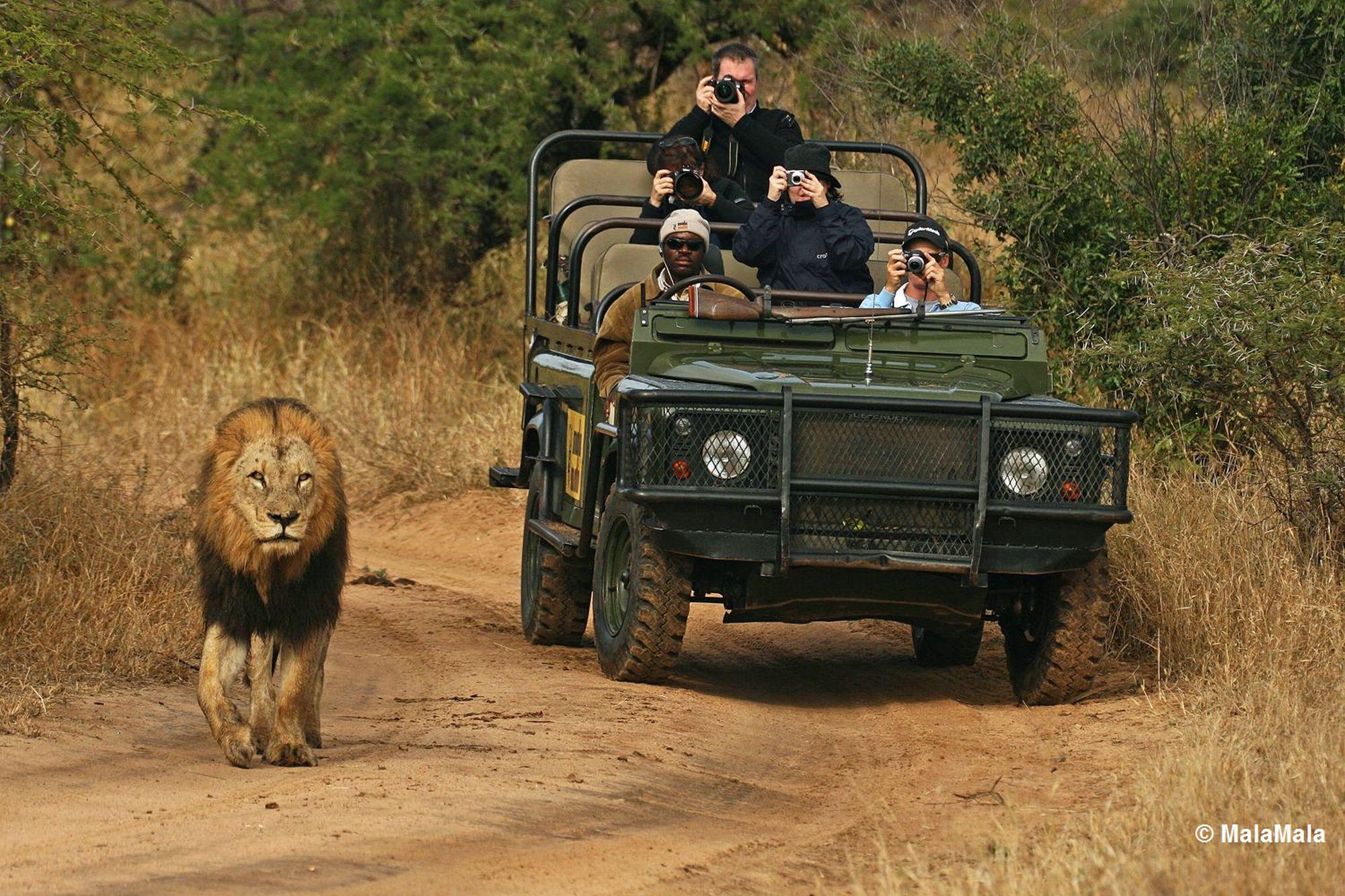 Mejor Botswana Safari. Viaje Inteligente