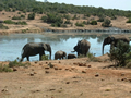 Addo Waterhole, Addo Elephant National Park, ©Audrey Nattrass