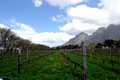 Wine Estate, The Cape Winelands, ©Anonymous