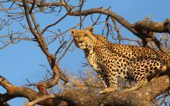 Travel Butlers - African Safari Specialists