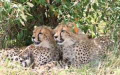 Kenya Safari Holidays