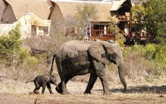 Budget Safari Lodges