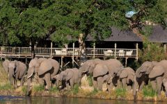 Elephants Drinking From A River By A Lodge