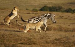 Malaria-Free Safaris in South Africa