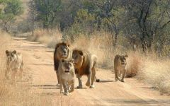 Safaris in the Waterberg