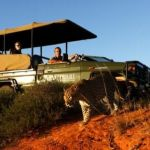 A safari in Shamwari, the Eastern Cape