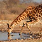 Etosha wildlife