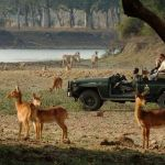 Safaris in Zambia
