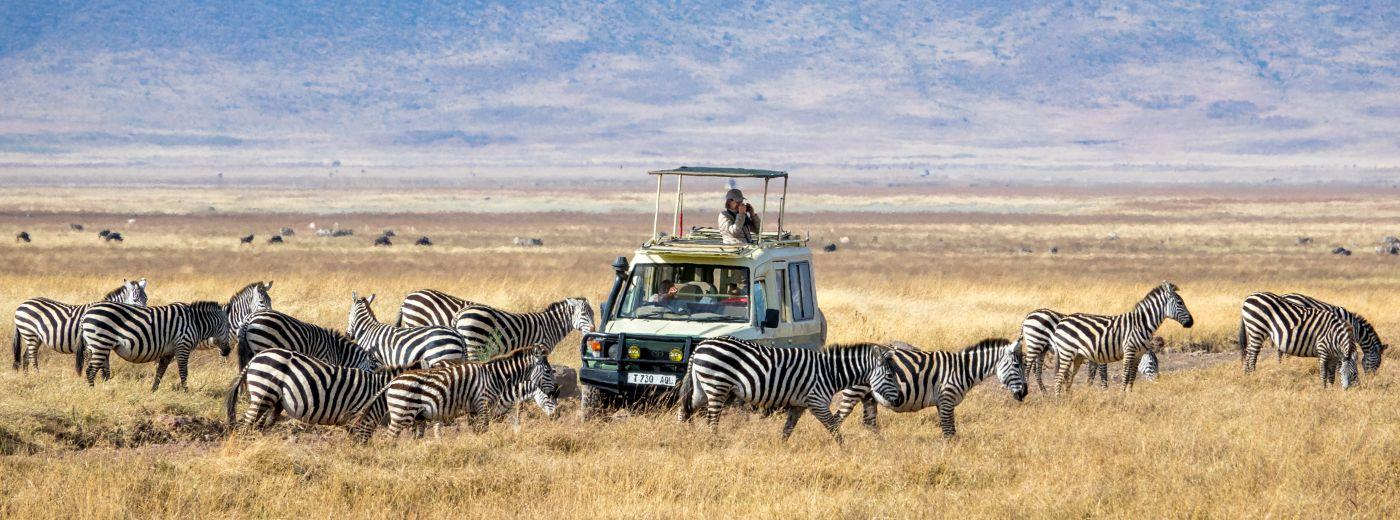 Discover Tanzania's Amazing Wildlife And Beaches