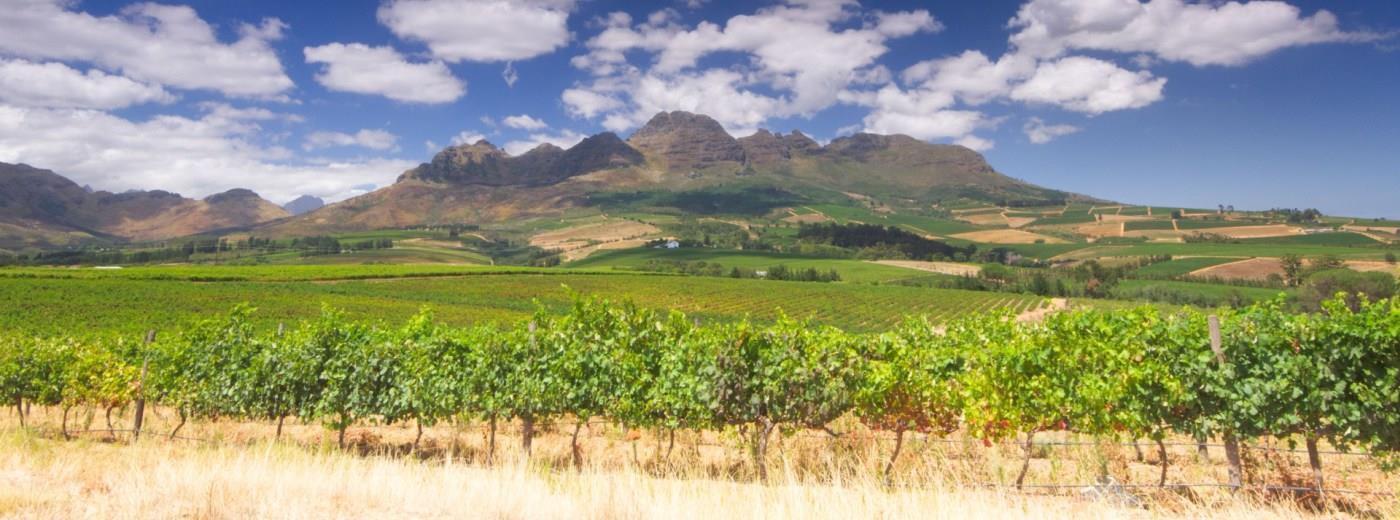 Stellenbosch Wine Route The Cape Winelands