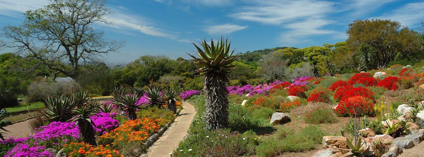 Kirstenbosch botanical gardens cape town for Jardin kirstenbosch