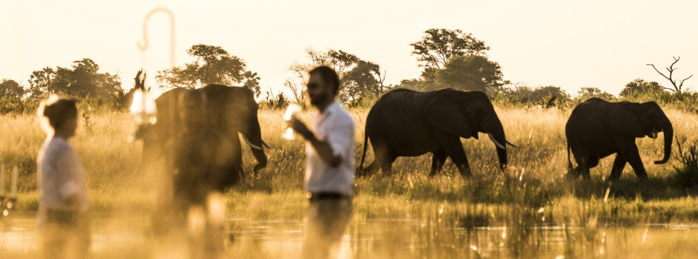 An Unrivalled Botswana Safari