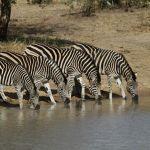 Shindzela Tented Safari Camp