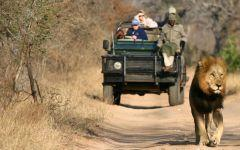 Thornybush Game Reserve