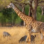 Zambia Holiday Ideas