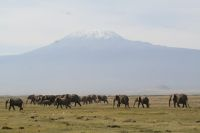 img_2781-first-game-drive-to-porini-amboseli-elephants-in-front-of-mt-kili