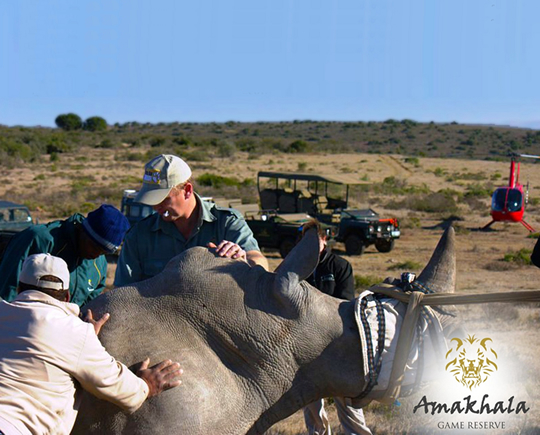 Safari School at Amakhala Game Reserve