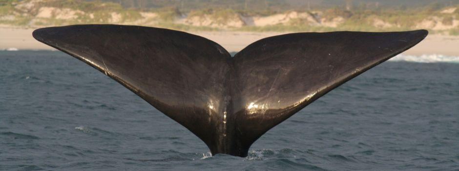 234-south-africa-whale-watching