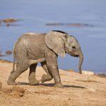 http://www.dreamstime.com/stock-photos-baby-elephant-image9183873