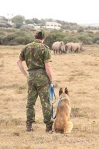 Shamwari Game Reserve Introduces K9 Tracking