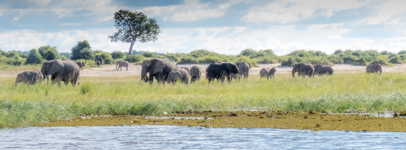 Botswana In The Green Season News and Updates