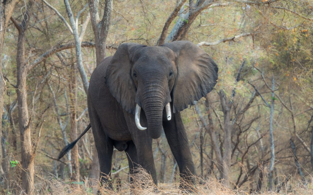 Elephant on the river bank, Lower Zambezi National Park