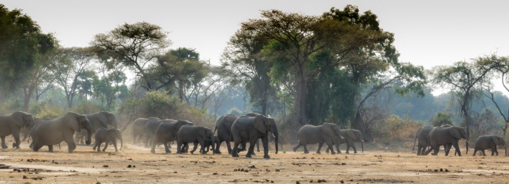 Elephants on the move, Lower Zambezi, Zambia