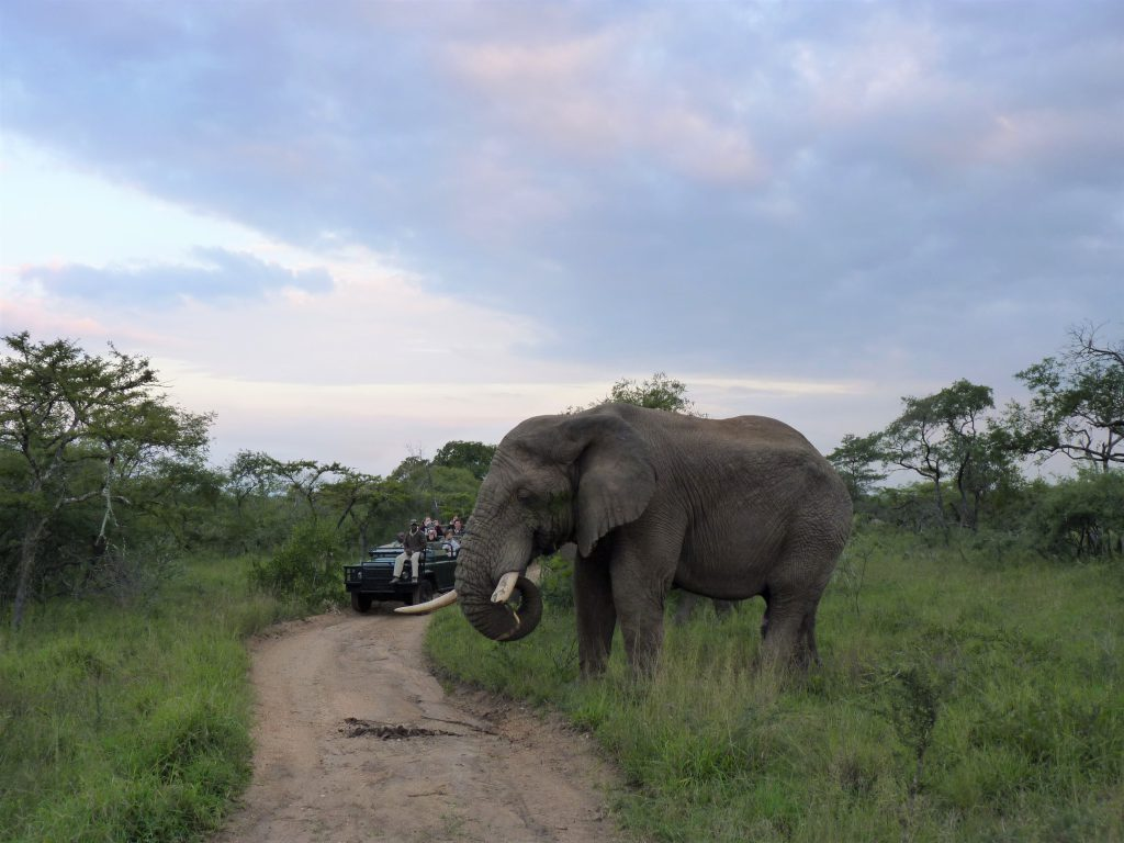 Game Viewing In Thornybush