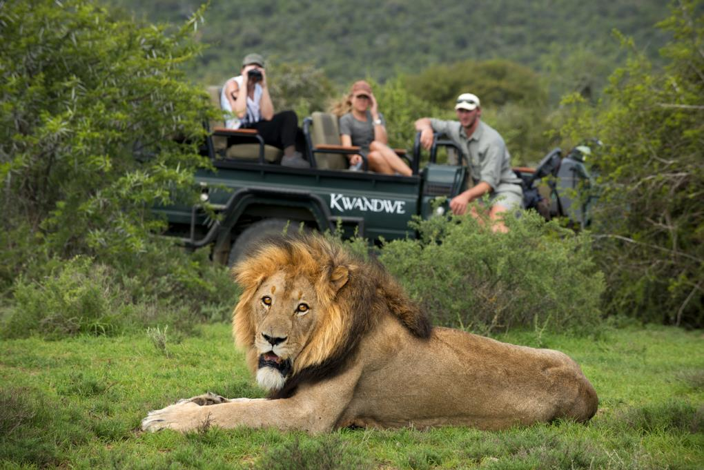 Big 5 Safari At Kwandwe