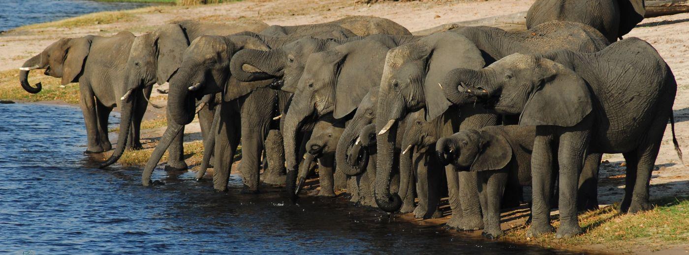 Botswana News and Updates