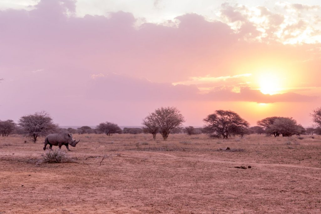 Rhino at sunset in the Waterberg, South Africa.