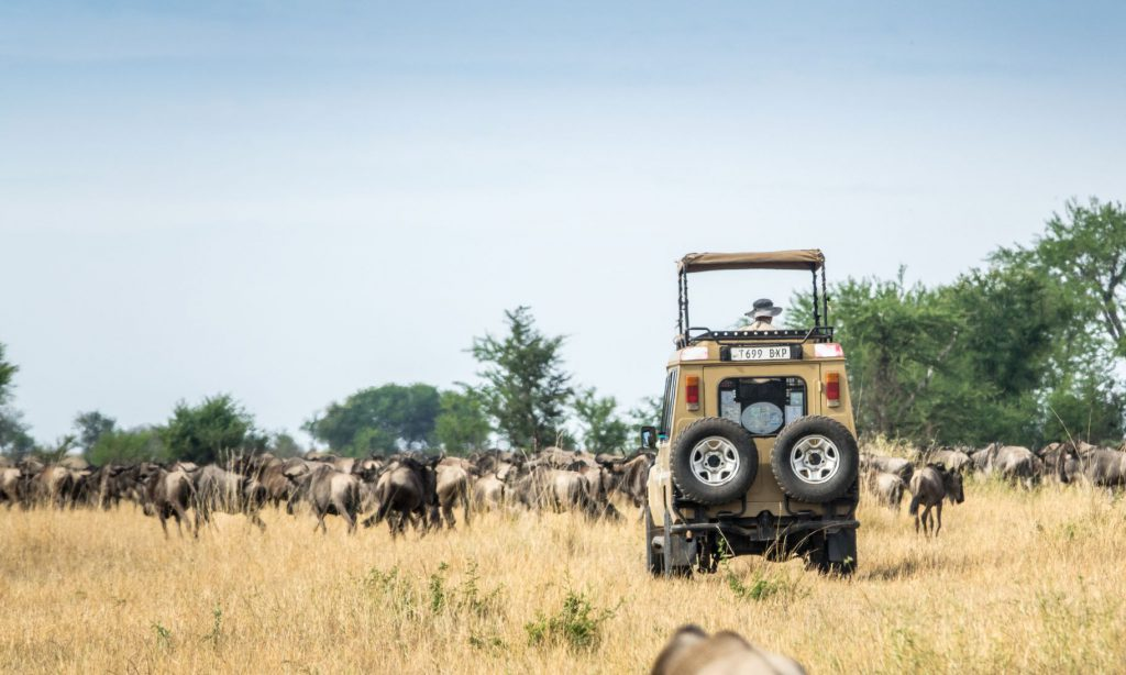 A private escorted tour through the Serengeti