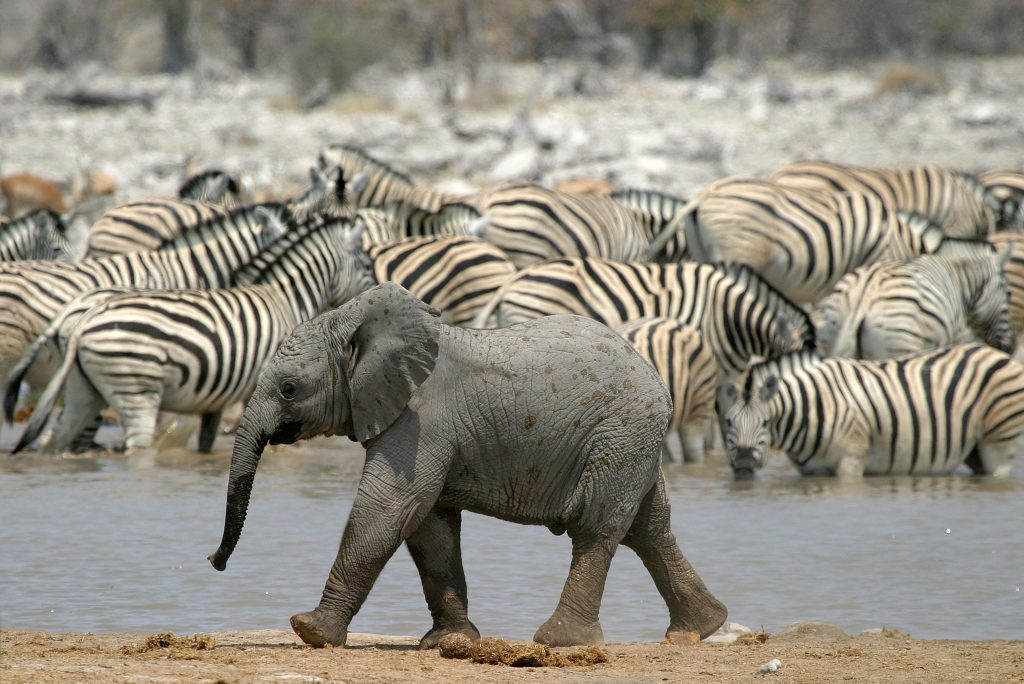 Game Viewing in Etosha