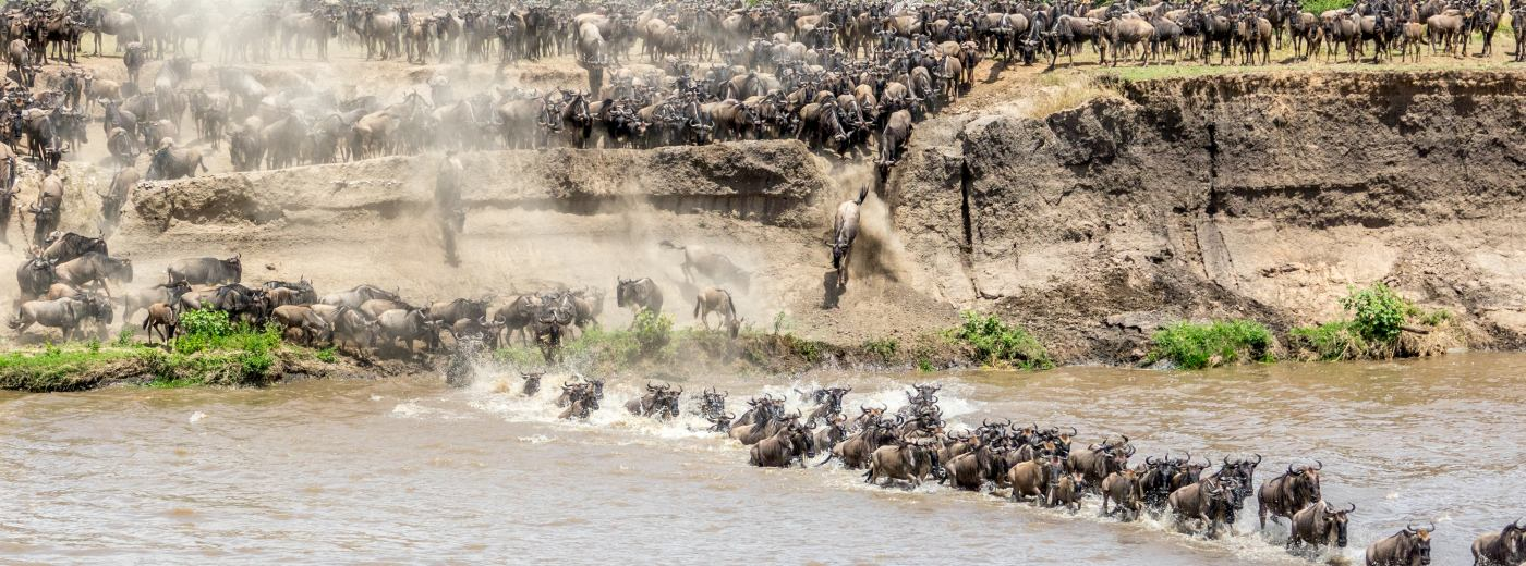 Watching and Waiting for the Wildebeest