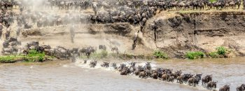 DSC04645-2_migration, river crossing, tanzania, wildebeest_491