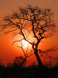 Sunset In The Bush, Sabi Sand Game Reserve, ©Chris Carrick