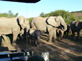 Elephants up close, Amakhala Game Reserve, ©Georgie Tarrant