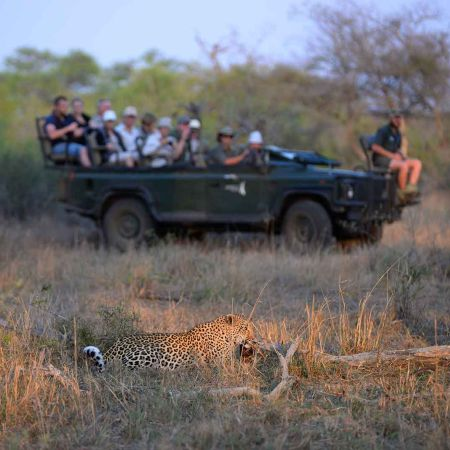 Game drive from budget safari lodge in South Africa.