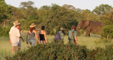Walking safari and meeting an elephant