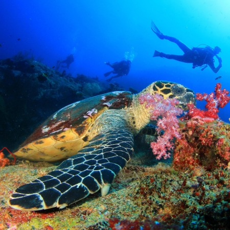 Underwater diving with turtles