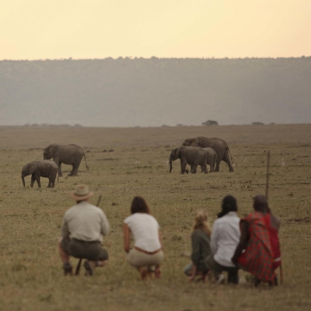 Game walk from Elephant Pepper Camp in the Mara North Conservancy