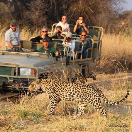 Seeing a leopard on a game drive from Okonjima Luxury Bush Lodge