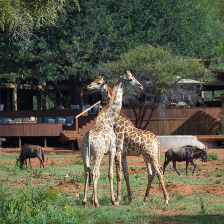 Wildlife outside Tintswalo at Lapalala Lodge