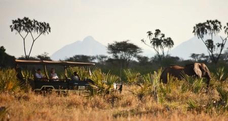 Elephant sighting on a game drive in Meru National Park from Elewana Elsa's Kopje