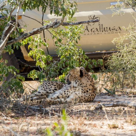 Game Drive in the Sabi Sand Game Reserve