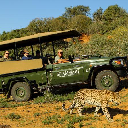 Tracking a leopard, malaria-free Shamwari Game Reserve.