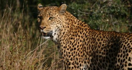 Leopard sighting in the Kruger National Park