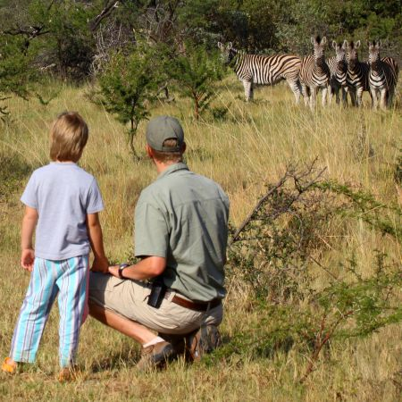 Watching Zebra at Ants Reserve in the Welgevonden, South Africa