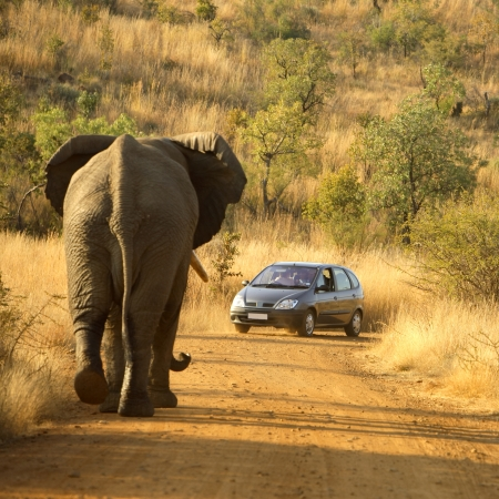 Self-driving in Pilanesberg and meeting an elephant on the road is a thrill!