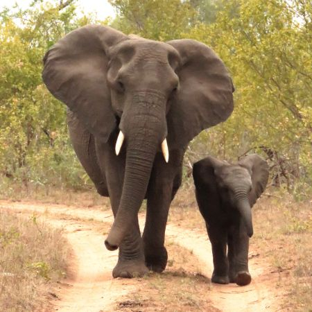 Elephant and Baby Taking a Stroll